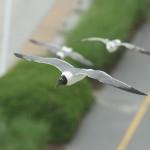 PhotosbyAvery.com